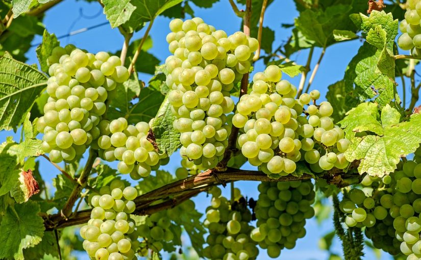 Le tourisme du vin : c'est quoi ?